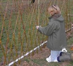 braiding a willow structure