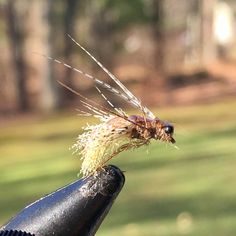 """46 Likes, 3 Comments - Seth Cavarretta (@sethcavarretta) on Instagram: """"A pair of organza Caddis pupae #flytying #flyfishing #troutfood #troutbum"""""""