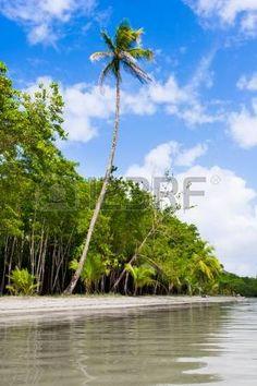 Palmbomen op het strand Zeester Bocas Del Toro in Panama photo