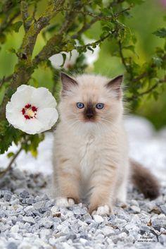 Sweet Little Kitten