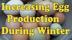 Learn a very simple way to increase egg production.