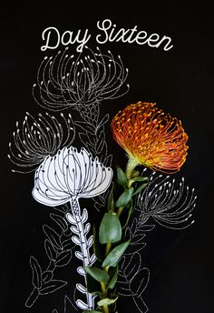 how to draw a pincushion protea