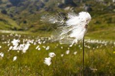 Flower in the wind.