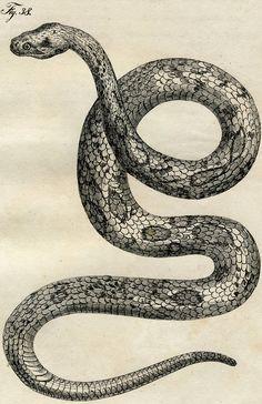Early Vintage Snake Image