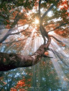 forest with fog and sun rays by Mikel Martinez de Osaba (Spain? Forest Photography, Art Photography, Best Nature Images, Sun Rays, Autumn Trees, Amazing Nature, Sunlight, Scenery, Tumblr