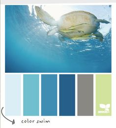 Coastal and Beach Decor: Coastal Decor Color Palette - Color Swim
