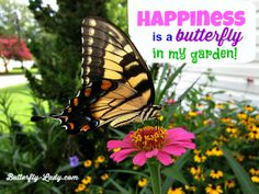 Happiness is a butterfly in my garden!