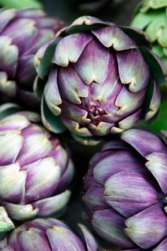 thelordismylightandmysalvation:Artichokes  Colors ~ Purple and Green