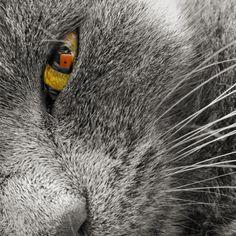 Closer by Dávid Detkó on 500px | with Nokia Lumia 930 | #nokia #lumia930 #raw #cute #kitty #500px
