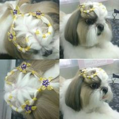 Shih tzu Shih Tzus, Shih Tzu Dog, Yorkie, Yorkshire Terrier Haircut, Creative Grooming, Rough Collie, Sheltie, Top Knot, Pet Shop