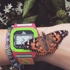 freestylewatches Sharks and butterflies, just another day for @alexaholbert #freestyle #myfreestylewatch #sharkclip