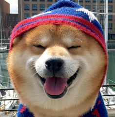 Shiba Inu Berry loves to be happy and fashionable!!