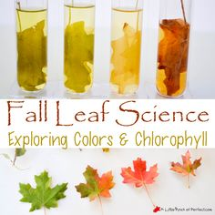 After exploring and Learning About the Parts of Leaves we decided to learn about leaf color and chlorophyll with an easy science experiment. I found the idea to extract chlorophyll from leaves on Home Science Tools. I thought that it sounded simple enough we could give it a try with a few modifications. I am so …