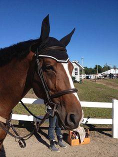 Hey, j'ai trouvé ce super article sur Etsy, chez https://www.etsy.com/fr/listing/288044441/modele-de-bonnet-voile-mouche-du-cheval