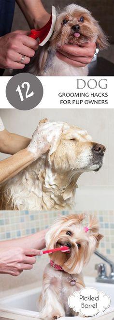 Repinned grooming station grooming tips and tricks pinterest 12 dog grooming hacks for pup owners how to groom your dogs pet grooming hacks hacks for pet owners tips and tricks for all pet owners diy pet grooming solutioingenieria Images
