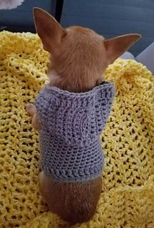 Crochet Chihuahua Hoodie pattern by Cami Weaver Ravelry; free crochet pattern for tiny dog sweater Crochet Dog Sweater Free Pattern, Crochet Hoodie, Hoodie Pattern, Crochet Patterns, Sweater Patterns, Pdf Patterns, Top Pattern, Cute Crochet, Crochet Baby