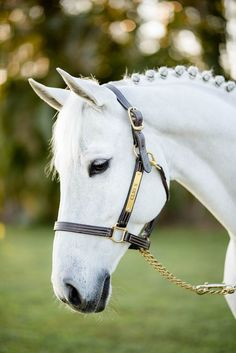 Cute Horse Pictures, Beautiful Horse Pictures, Most Beautiful Horses, Horse Photos, Animals Beautiful, Funny Horses, Cute Horses, Pretty Horses, Horse Love
