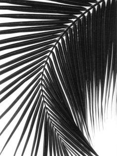 Palm tree • Style School ByDanie