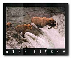 Absolutely Outstanding! Jazz up your living space with this Grizzly Bears wildlife Animal Art Print Poster. This poster displays the image of Grizzly Bears try to catch fish into the river which is sure to attract lot of attention and makes your wall center of attraction. It is a beautiful gift for someone who loves wildlife animals or would be inspired by this tranquil scene. It goes well with all decor style and ensures high quality paper with a wonderful color accuracy which help long…
