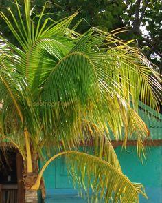 Seven Mile Beach, Negril, Jamaica Plan your #WinterEscape in #Bluefields #Jamaica at www.lunaseainn.com