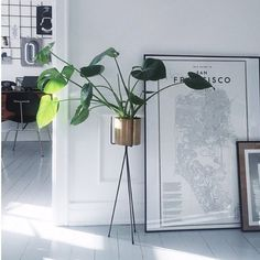 Our Plant Stand and Hexagon Pot are perfect for decorating with your favorite plants around the house. ferm LIVING Plant Stand - http://www.fermliving.dk/webshop/webshop.aspx?eComSearch=True&ID=247&eComQuery=Plant+Stand ferm LIVING Hexagon Pots - http://www.fermliving.dk/webshop/webshop/hexagon-pot-large.aspx