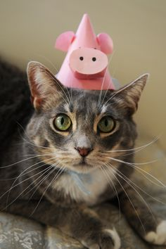 Pig Birthday Hat I am doing that to my kitty! Silly Cats, Cats And Kittens, Cute Cats, Funny Cats, Crazy Cat Lady, Crazy Cats, Image Chat, Gatos Cats, Pig Party