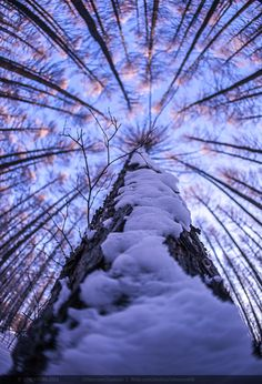 Wow! What a shot. #photography #perspective #trees | Via 500px, Flickr; photo credit SimonSun | pinned via @Arbor Day Foundation