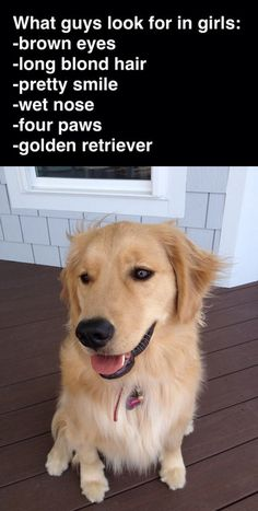 funny-guys-look-for-girls-golden-retriever