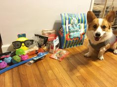 I didn't get a chance to show off all my birthday gifts! Mom told everyone NOT to get me anything. Of course no one listened because it wasn't a Corg Executive Officer (CEO) decision. Silly mom. What was she thinking? Thank you @vala_the_corgi @princessdottiemaythecorgi @kelvin.and.hobbes @dexterthecorg and Aunty Amanda and Uncle Michael for the gifts. We are so touched and happy to receive so much love!! A special thanks to @taco.the.corgi for the paw written card (not pictured) all the way…