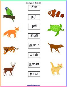 Free printable for kids (toddlers/preschoolers) flash cards/charts/worksheets/(file folder/busy bag/quiet time activities)(English/Tamil) to play and learn at home and classroom. Lkg Worksheets, 1st Grade Math Worksheets, Free Printable Worksheets, Kindergarten Worksheets, Printables, Preschool Activity Sheets, Toddler Preschool, Preschool Learning, Handwriting Analysis