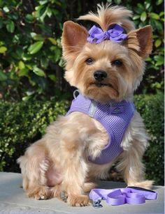 Purple Small Dog Harness at Doggie Clothesline $19.95