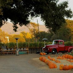 to Table Event / Catering By: Smoke Open Fire Cooking Napa Valley ...