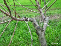 Κέντρωμα δέντρων Garden Guide, Garden Sculpture, Plants, Plant Propagation, Gardening, Projects, Log Projects, Lawn And Garden, Plant