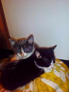 ANIMALES EN ADOPCION EN GALICIA: Mei y Chang, dos hermanitas en adopción. Galicia