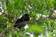 The national Parks around Puerto Viejo Cahuita, Pacific Coast, Bald Eagle, Costa Rica, National Parks, Blog, Pacific Rim, Blogging, State Parks
