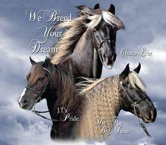 Beautiful Rocky Mountain horses