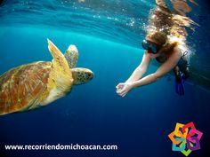 RECORRIENDO MICHOACÁN. En la playa de Faro de Bucerías se encuentran los restos de un barco hundido, mismos que puede visitar y pasar un divertido momento buceando en las aguas templadas que tiene este sitio. Ofrece una visibilidad de 6 a 30 metros de profundidad, que le harán recrearse con un espectáculo único de flora y fauna marina. Le invitamos a vacacionar a Michoacán. BEST WESTERN MORELIA http://www.bestwestern.com.mx/best-western-plus-gran-hotel-morelia/