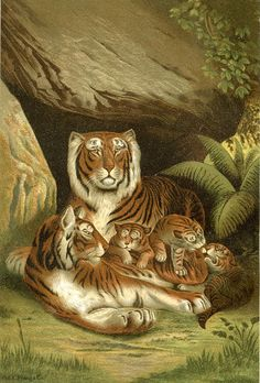 Here we have a splendid Vintage Tigers Printable! Shown on the Antique Print above are a Mother and Father Tiger and 3 adorable Tiger cubs!