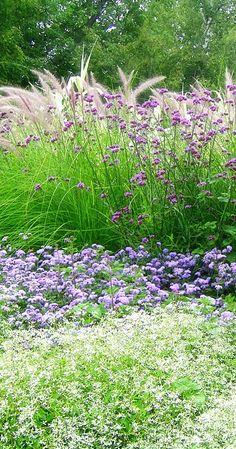 garden inspirations- love the verbena in front of the grass - Modern Prairie Planting, Prairie Garden, Meadow Garden, Garden Cottage, Dream Garden, Backyard Landscaping, Landscaping Ideas, Garden Landscape Design, Ornamental Grasses