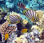 Fantastic guide to all you need to know about snorkeling and the best locations.