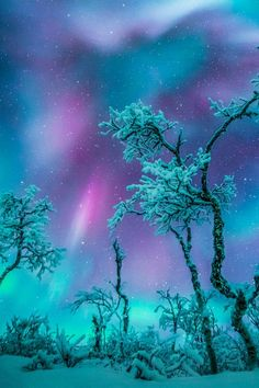 New Sweden Nature Winter Aurora Borealis Ideas Beautiful Sky, Beautiful Landscapes, Beautiful World, Beautiful Places, Landscape Photography, Nature Photography, Photography Lighting, Scenic Photography, Night Photography