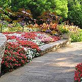 2. Repetition is obtained by repeating similar object or elements:  A good example would be using the same plants, like these red impatiens along a border. The plants are the same size and color, and are evenly spaced and repeat all down the line of the border. Your eye moves from one to the next very smoothly giving reassuring repetition.
