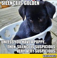 Silence With A Puppy