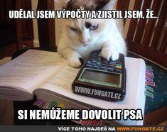 Cats give zero fucks – Memes Funny Cat Memes, Funny Dogs, Hilarious, Funny Animal Quotes, Funny Animal Pictures, Fat Animals, Funny Animals, Original Memes, Work Humor