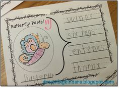 All about BUTTERFLIES! Labeling the body parts of butterflies! Students chose 4 body parts to stretch slowly and write the sounds they heard in each word!  dreambigkinders.blogspot.com