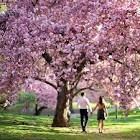 DESTINATION. To find a place where the trees bloom so full would be fantastic. I can only imagine all the beautiful photo op's. 2
