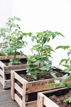 Ein neues Plätzchen für die Tomaten