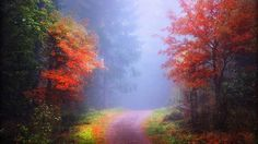 Sunrise Autumn Photography Finland Softness Beauty Sidewalk Plants Creative Pre Stunning Nature Fall Trees Landscapes Forests Beautiful Scenery Seasons Morning Leaves Dual Wallpaper
