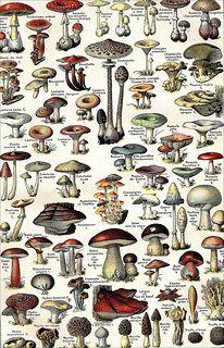 The 1920s-1922 Larousse Universel-mushrooms | Flickr - Photo Sharing!
