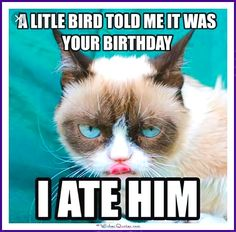 Birthday Meme with a Cat: A little bird told me it was your birthday!